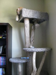 customer cat tree